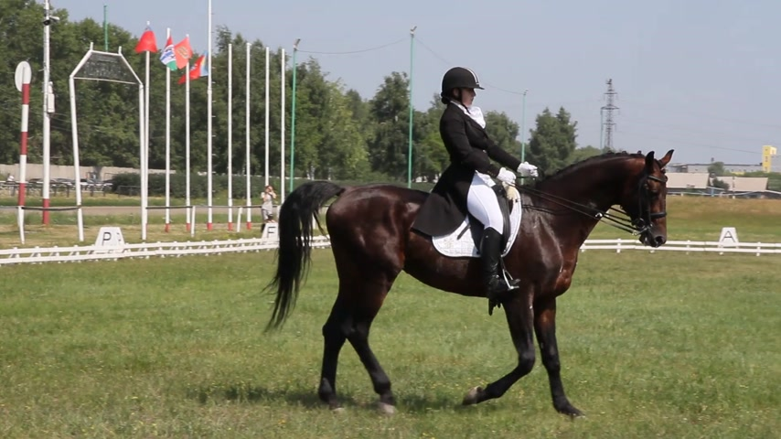 terbiye : dressage horse and rider