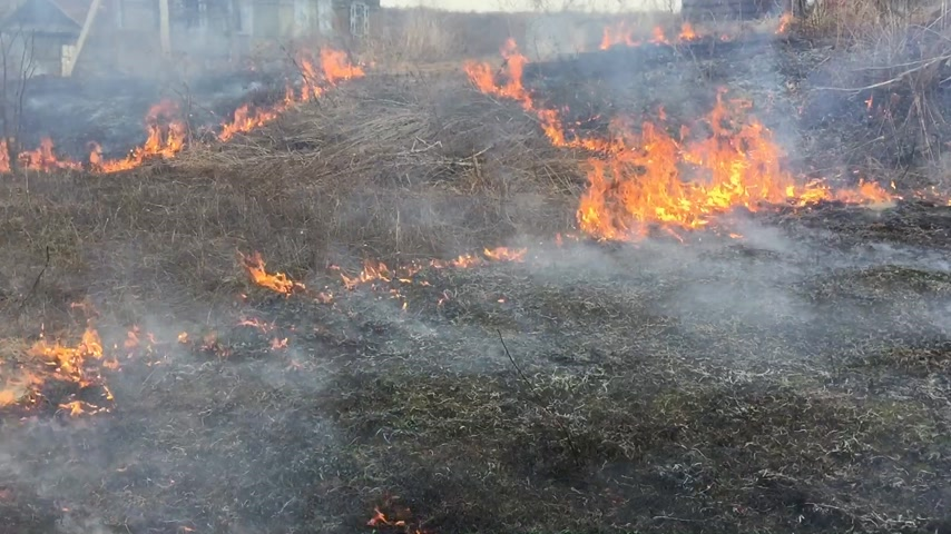 engulfed : Fire rages in long grass, foreground