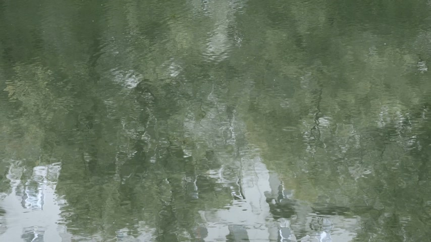 Green rippling water like mirror on smooth surface of pond