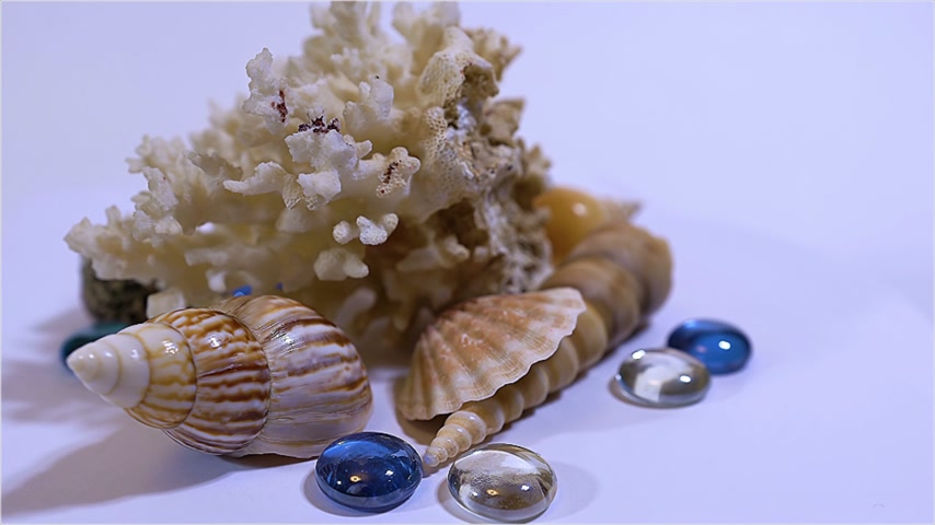 starfish : beautiful composition for decor of coral, colored glass and shells