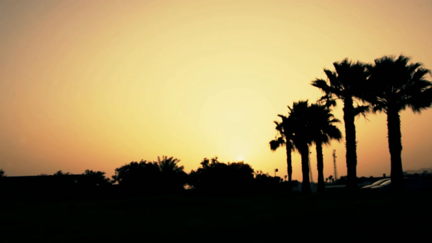 tunisia : A beautiful sunrise over palm trees in an exotic country Stock Footage