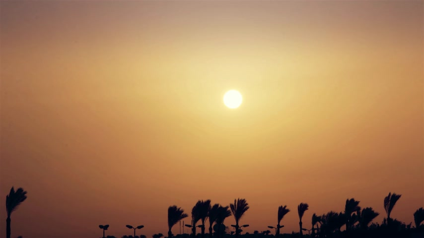 tunisia : A beautiful sunrise over palm trees in an exotic country. time-lapse
