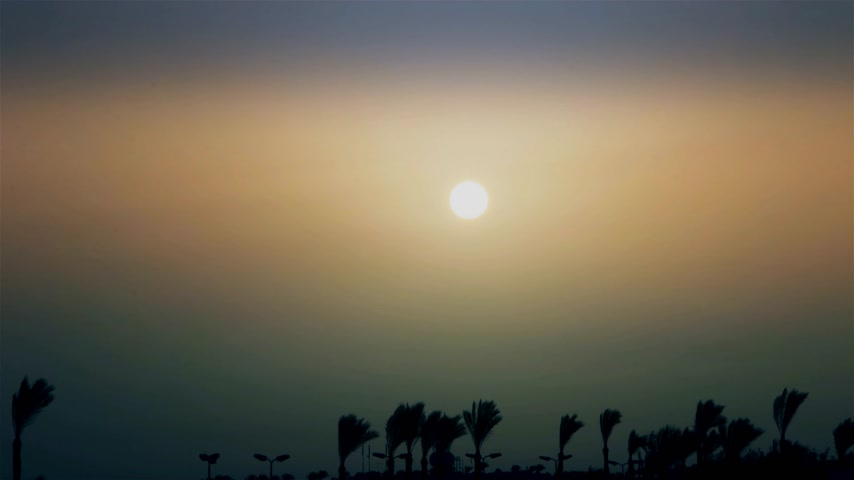 ОАЭ : A beautiful sunrise over palm trees in an exotic country. time-lapse
