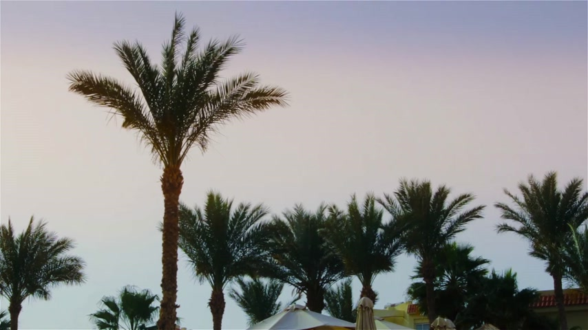 tunisia : The leaves of a palm tree sway in the wind against the backdrop of a bright sky
