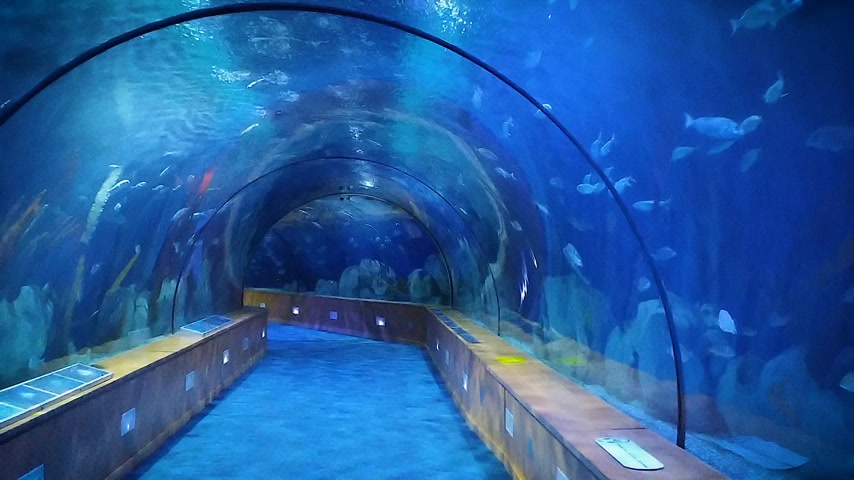 oceanography : Modern underwater tunnel for the inspection of marine life