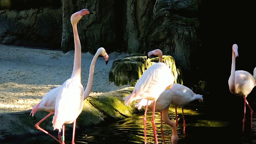 swamp bird : A group of pink flamingos near a small waterfall