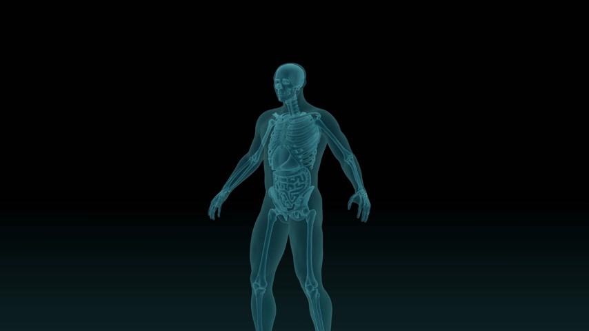 interno : Anatomically accurate 3d animation of human body x-ray scan with visible trachea and bronchi 3d render isolated on black background