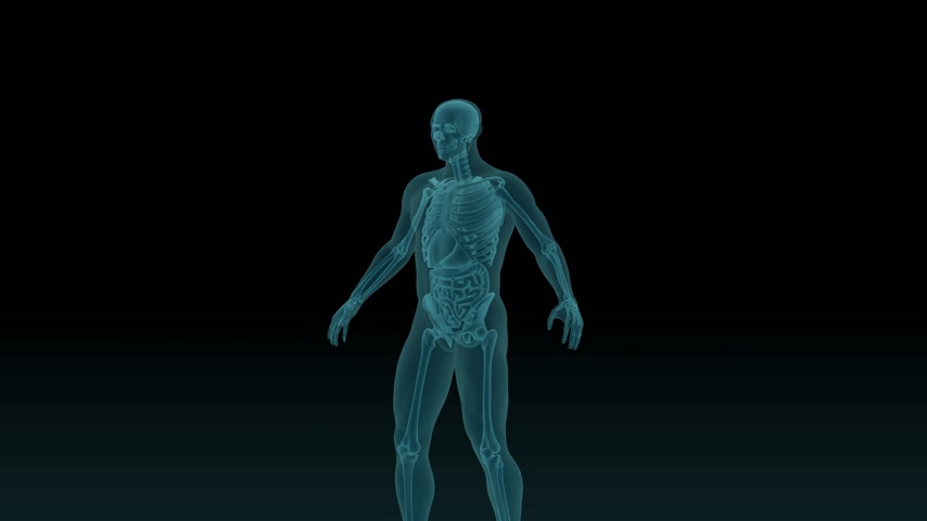 Anatomically accurate 3d animation of human body x-ray scan with visible lungs 3d render isolated on black background