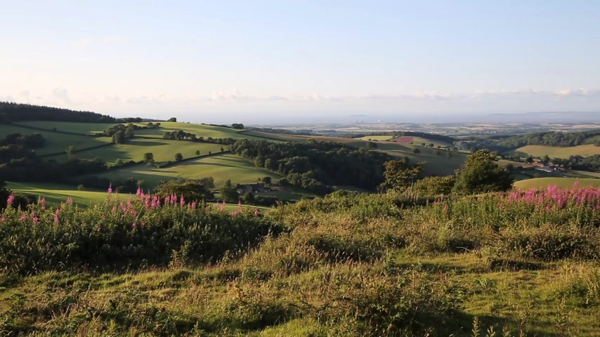 kopec : Quantock Hills Somerset England UK countryside views towards Hinkley Point Nuclear Power station and Bristol Channel on a summer evening from Cothelstone hill with pink flowers PAN