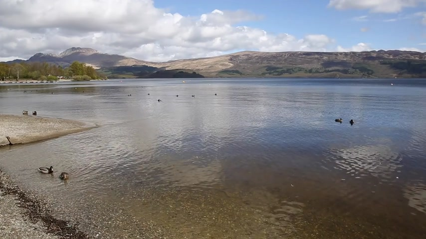 argyll : Loch Lomond Scotland UK The Trossachs National Park on a calm day with ducks and mountains popular Scottish tourist destination pan