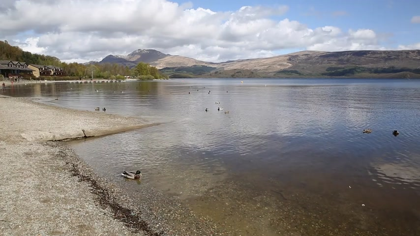 argyll : Loch Lomond Scotland UK The Trossachs National Park on a calm day with ducks and mountains popular Scottish tourist destination Stock Footage