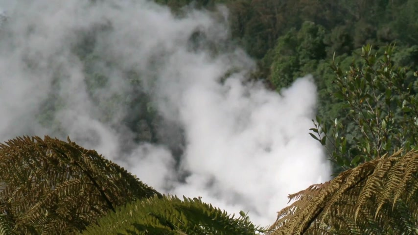 ад : Rotorua, New Zealand. view theough ferns over Te Puia thermal area,