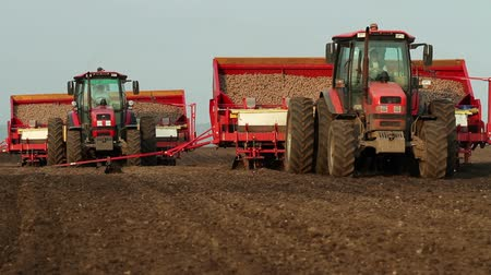 brambory : Potato tubers planting by using modern agricultural machinery