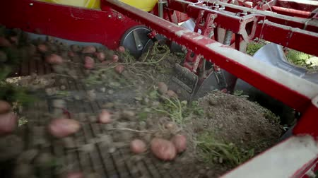 brambory : Harvesting potatoes using by a modern potato harvester