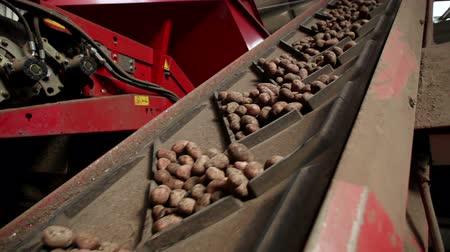 paketleme : Potatoes on a conveyor belt