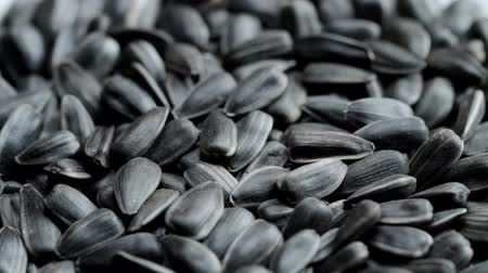 elipse : Roasted sunflower seeds in shell