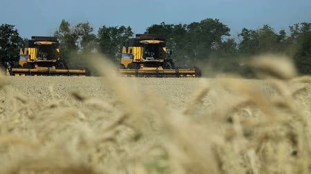 sty : Harvesting of cereals: wheat, barley, rye. Stock Footage