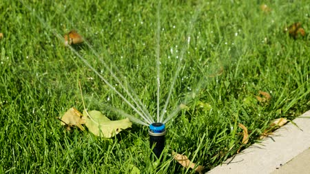 water sprayer : Garden irrigation. Automatic sprinkler watering system for plants and lawn. HD Stock Footage