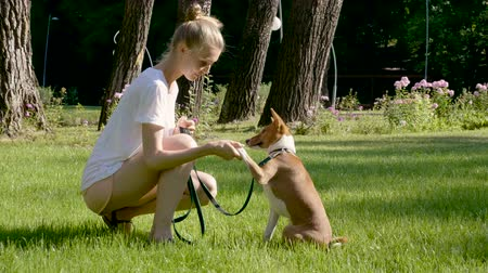 darovat : Domestic animals. Young blonde girl teaching a basenji dog giving paw. 4K