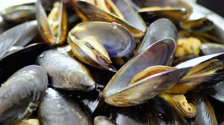 shellfish recipe : Fresh shellfish seafood. Close-up of bowl with raw mussels in opened shells. 4K