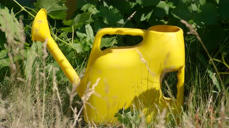 konewka : Close-up shot of a yellow watering can standing on ground in summer garden. 4K