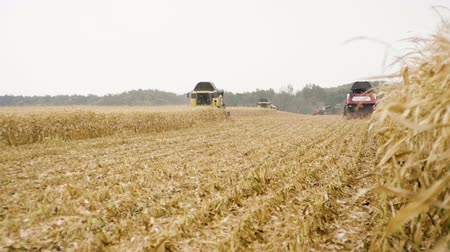 広角 : Agricultural machinery. Three combine harvesters harvesting corn. Slow motion. HD