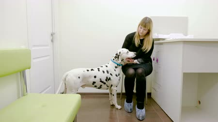 domestic short haired : Young pretty woman and her dalmatian dog having an appointment with veterinarian in a veterinary clinic. 4K