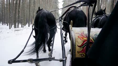 cavalo vapor : Troika. Russian carriage drawn by a team of three black horses. Slow motion. HD