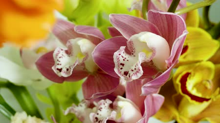 Bouquet of orchid. Close-up shot of fresh plant with pink and yellow flowers. 4K