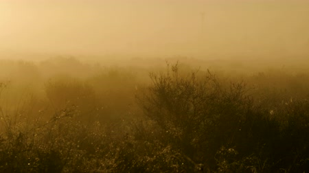 Landscapes of Torrevieja. Heavy fog and dew on green fields at dawn in Spain. 4K