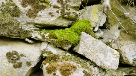 сосновая шишка : Eastern Pyrenees. Close-up shot of moss on rocks of the mountain. 4K