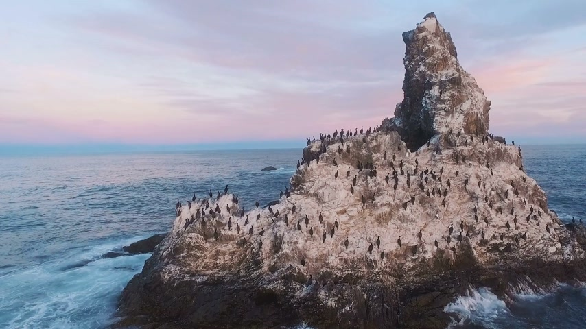 chukchi : Flying over the cliff into the sea. Birds on a rock in the sea. Island with birds in the ocean