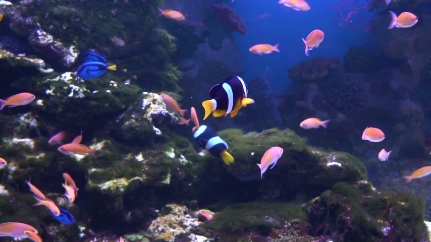 wieloryb : Sea and Ocean life. Wonderful underwater world. Fish in the aquarium