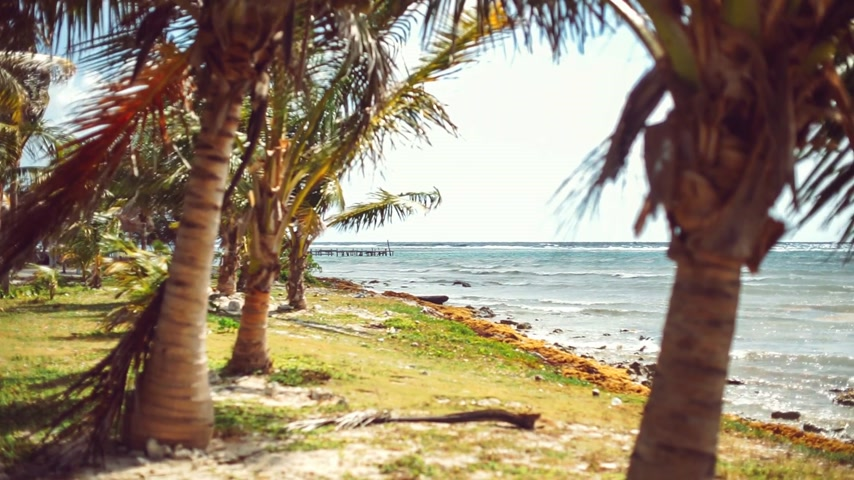 escapadas : Tropical beach with palm trees Archivo de Video