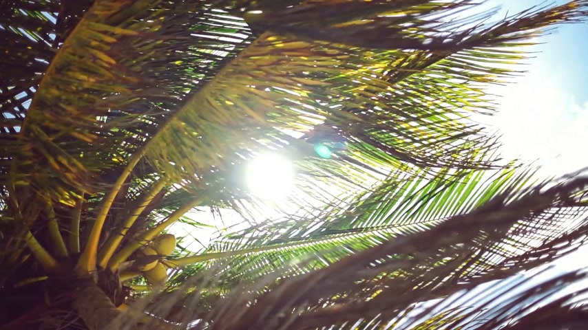 breezy : Sun shining through palm leaves