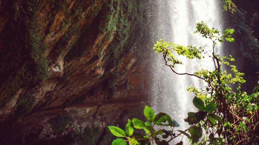 gushing : Natural waterfall in a jungle
