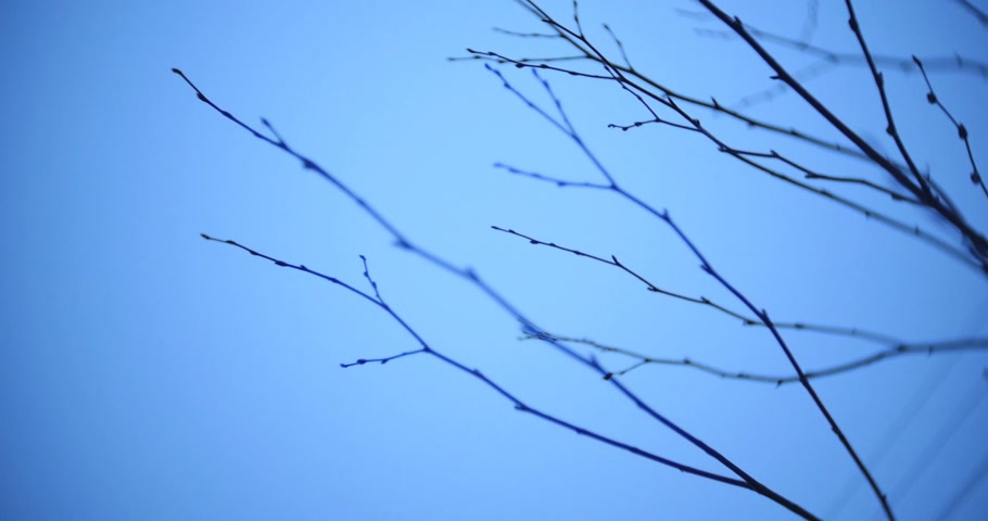dal : Abstract leafless tree branches on dark sky background.