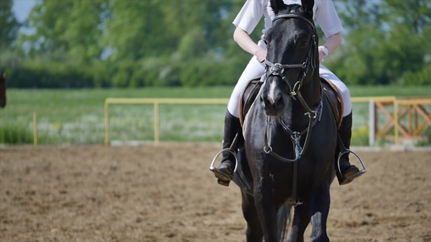 fur boots : Dressage horse and a rider on arena slow motion Stock Footage