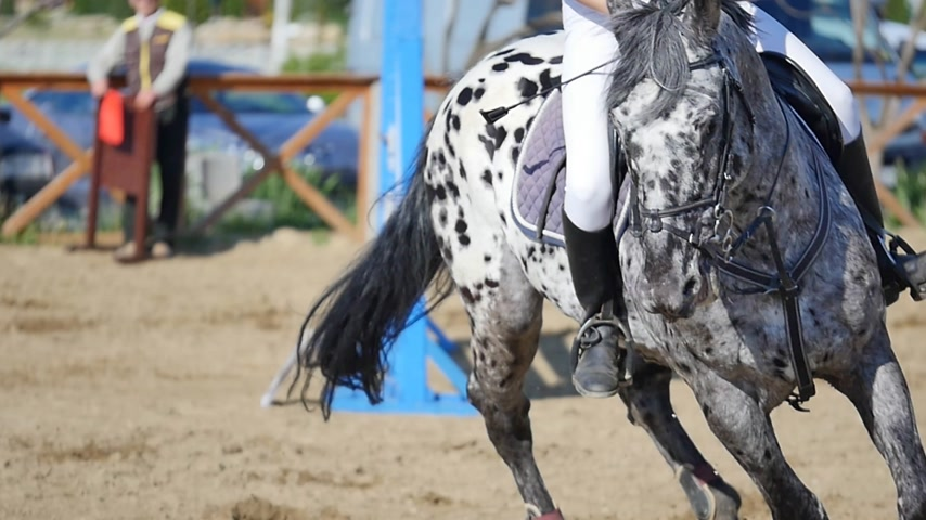 terbiye : Dressage horse and a rider on arena slow motion Stok Video