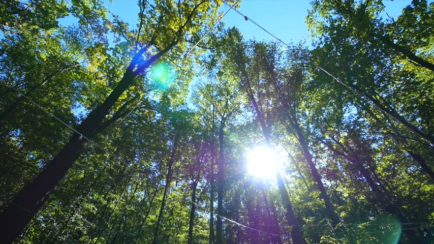 de faia : The sun beautifully illuminating the green treetops of tall beech trees in a forest clearing