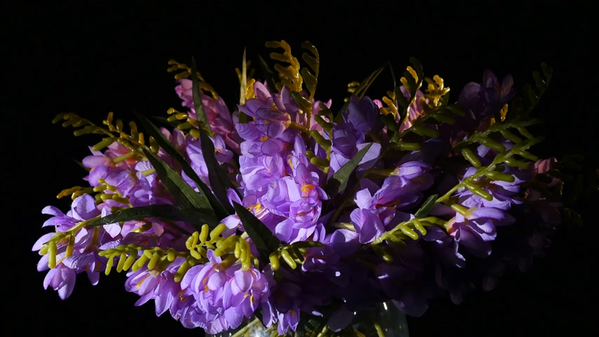 ağarmış : Purple flowering hoary stock or Matthiola incana Figaro Lavender blooms in a vase against a black background Stok Video