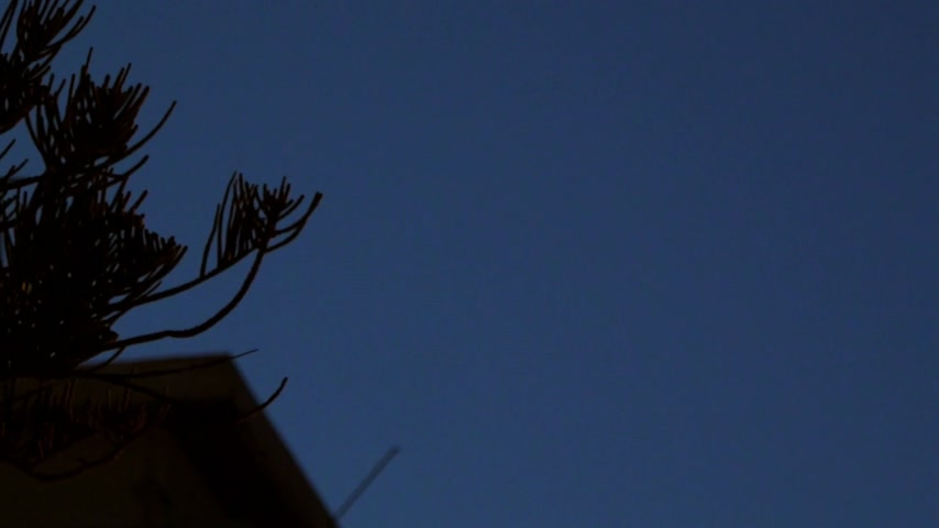 sembol : Close up video of an yellow neon hotel sign as seen from through a pine tree branch on twilight