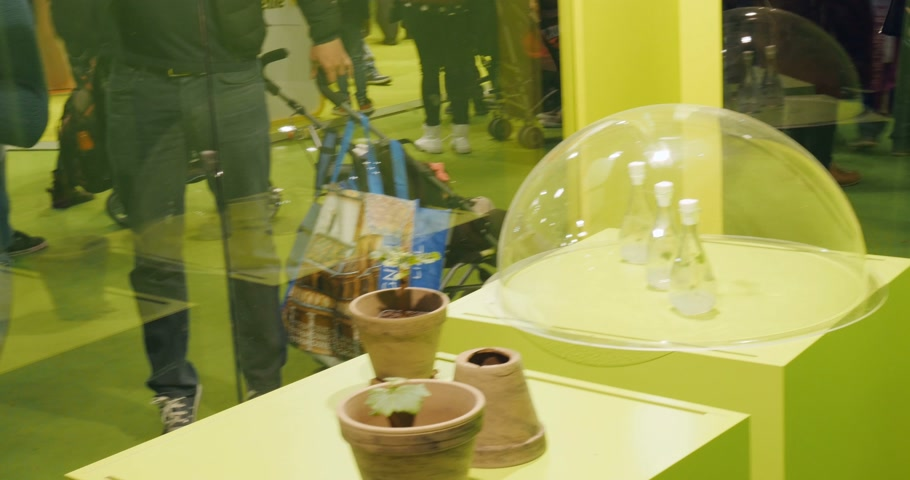 admirado : PARIS, FRANCE - FEB 2016: Vine hub hub, stump, block, vine, log, pap being admired by people - Agricultural Show - Salon International de Agriculture.