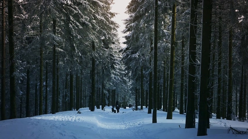 seebach : Cinematic winter day with snow and ski slope with kids, parents having fun in German mountains - wide perspective and fir trees
