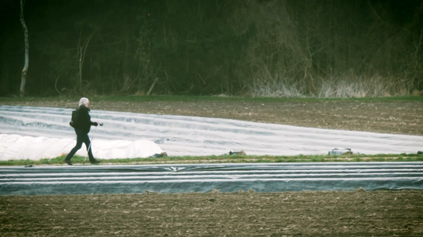cropland : Unrecognizable senior woman walking between traditional asparagus plantation in rural area with multiple rows covered with sun-protecting foil during winter spring - green tone Stock Footage
