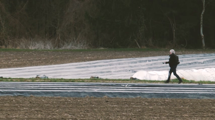 agrarian : Unrecognizable senior woman walking between traditional asparagus plantation in rural area with multiple rows covered with sun-protecting foil during winter spring - modern bio organic agriculture.