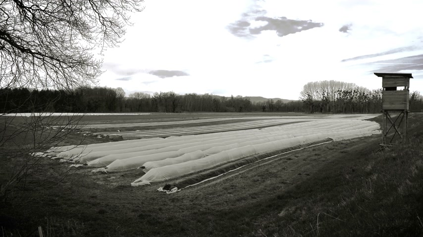 cropland : Surveillance hunting chalet next to asparagus plantation field in rural area with multiple rows covered with sun-protecting foil during winter spring - black and white footage