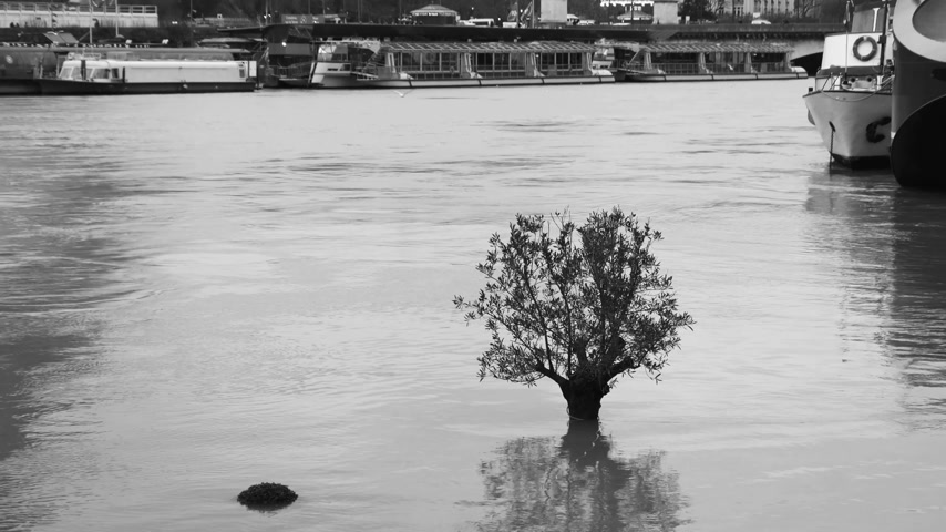 torrential rain : Zoom out from the lonely flooded tree to the houseboat barge peniche and Eiffel Tower - overflow flooding embankments on the Seine river in Paris after heavy rains - aerial drone news