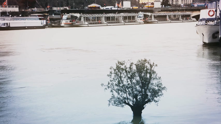 boathouse : Zoom out from the lonely flooded tree to the houseboat barge peniche and Eiffel Tower - overflow flooding embankments on the Seine river in Paris after heavy rains - aerial drone news