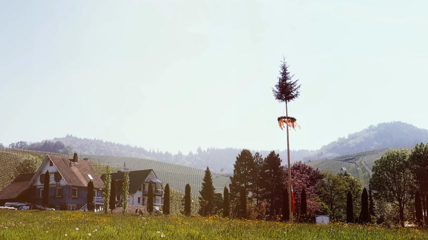paaldans : Maypole decorated for festival event with multicolored yellow and red ribbons in the colors of Baden-Wurttemberg state with vineyard hills in the background cinematic color grading